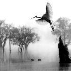 """"""" Spoonbill Landing"""" by Mike Larder"""