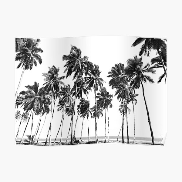 Palm Trees Black and White Poster