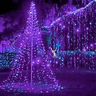 Purple Christmas by TJ Baccari Photography