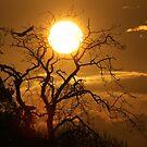 Sunrise Flight by Steiner62