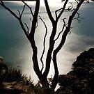 On the Edge by Paul Mercer