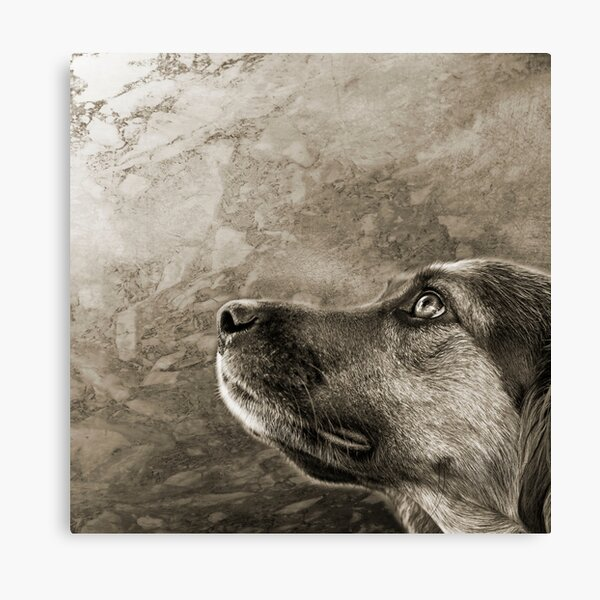 Black and White Loyal Dog  Canvas Print