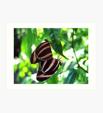 Orange Banded Butterflies - Cockrell Butterfly House Art Print