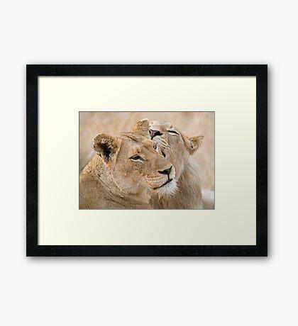 Lionesses Telling Secrets Framed Print
