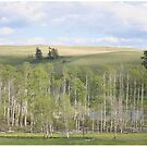 Lake and trees landscape by hidden-design