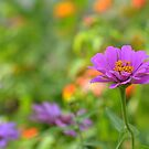 Single Flower by Sunshinesmile83