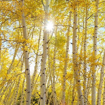 Golden Sunshine On An Autumn Day by mrbo
