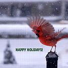 Cardinal for the Holidays by DeerPhotoArts