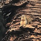 Squirrel Observes Nut With Camera by calvinincalif