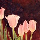 Tulipa gesneriana by Maizajean