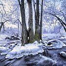 So cold.. by Päivi  Valkonen