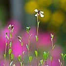 Solitary Flower by TomRaven