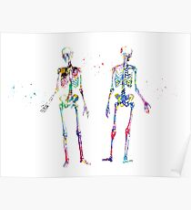 Human Body Skeleton Poster