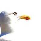 Bleached Seagull by Barnbk02