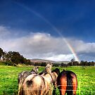 Horses Watching the Rainbow by Tone