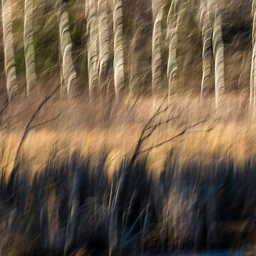 Abstract of Birch At The Edge Of The Marsh 2018-1 by Thomasyoung