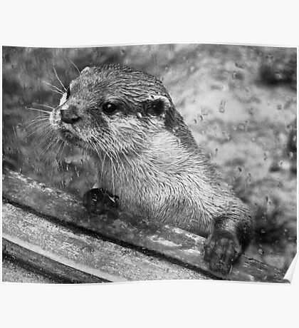 Otter Poster