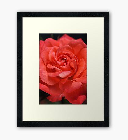 Roses Inspire Mary Framed Print