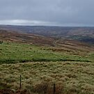 OPEN MOORS by andrewsaxton