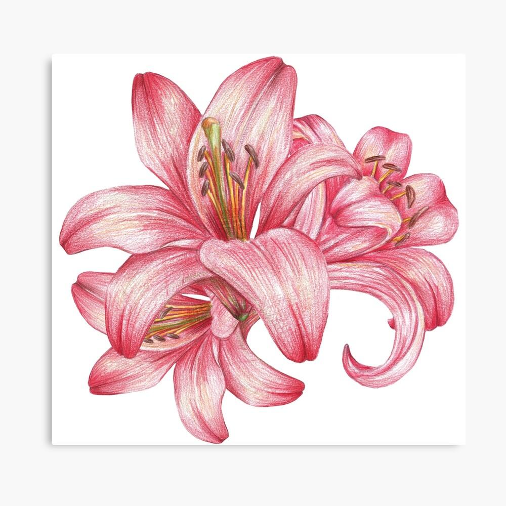 Lilie flowers_3 Leinwanddruck