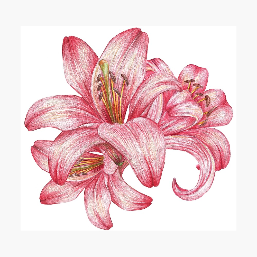 Lilie flowers_3 Fotodruck