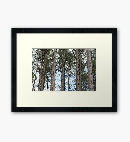 Looking Up In The Forest Framed Print