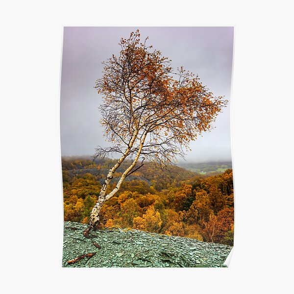 Autumn heart shaped tree  Poster