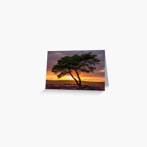 Egton tree sunset Greeting Card