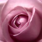 Adorable Soft Pink Hurmerinta Rose  by hurmerinta
