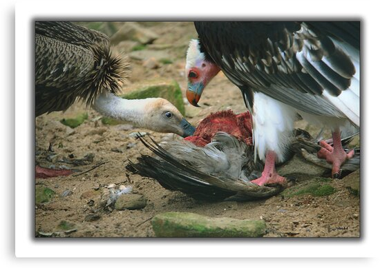 Cannibalism  by John44