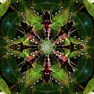 Star of Piloqutinnguaq (Little Leaf) by Rhonda Strickland