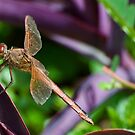 Dragonfly at Brookgreen Gardens by TJ Baccari Photography