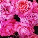 Pink Roses  by OliviaHathaway