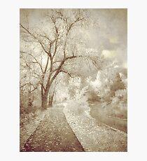 Autumn's Last Breath Photographic Print