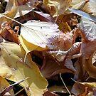 Herbst-Laub von Gourmetkater