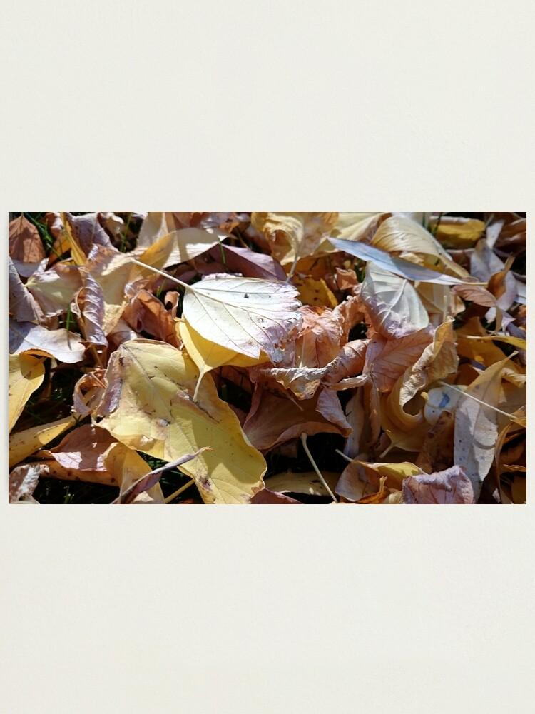 Alternative Ansicht von Herbst-Laub Fotodruck