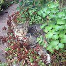 Katze Moritza von Gourmetkater