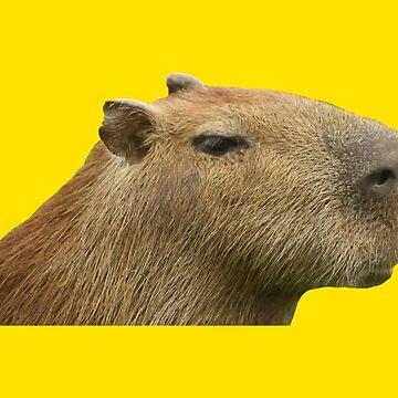 Capybara Profile by desexperiencia