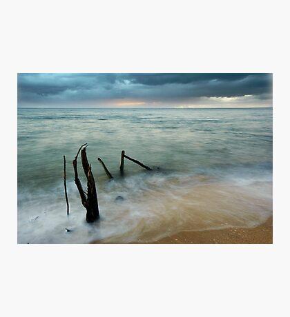 Washed Up - beach log at Ella Bay Photographic Print