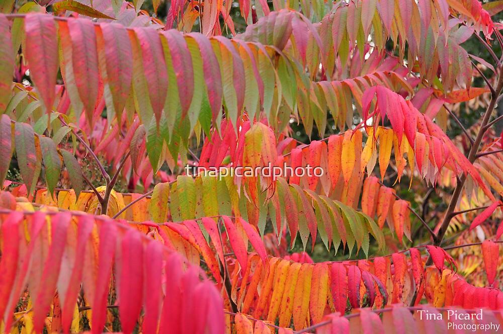 Tina Picard Photographer - Leaves by tinapicardphoto