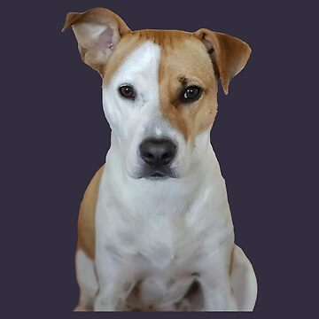 American Pit bull Terrier Dog by desexperiencia