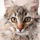 Cat Cinder #cat #kitty by JBJart
