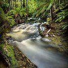Arthur River headwaters, Tasmania by Kevin McGennan