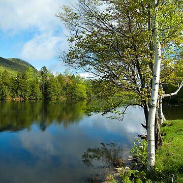 Spring Birch Woodward Reservoir, Vermont by srwdesign