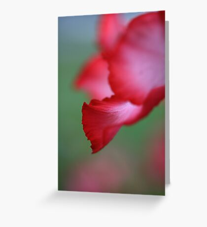 Textures in Pink Greeting Card