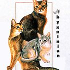 Abyssinian by BarbBarcikKeith