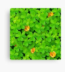Saint Patrick's clovers pattern with golden coins and ladybugs Canvas Print