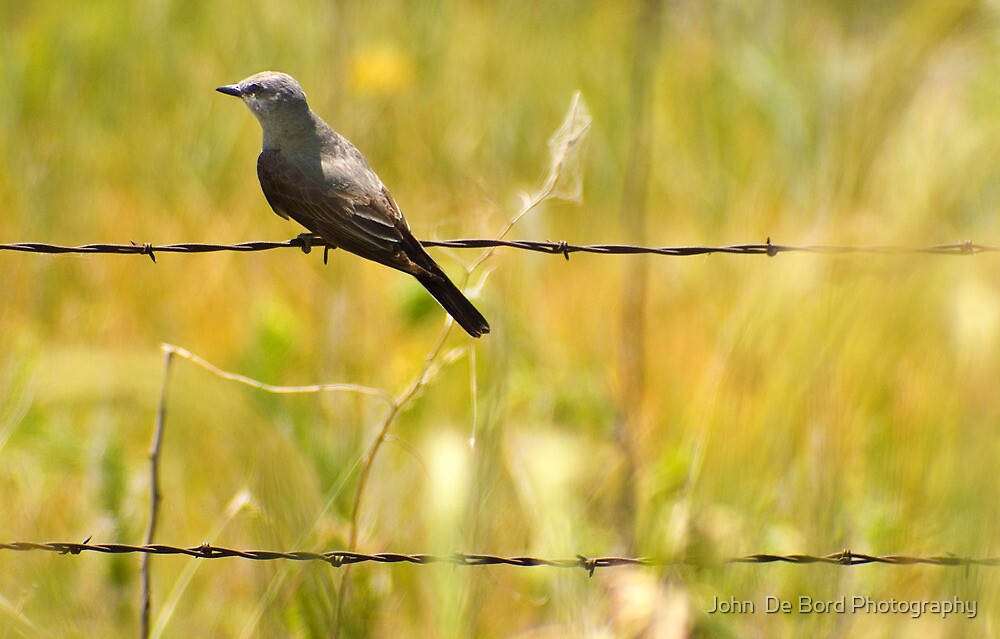 Hanging By A Wire by John  De Bord Photography