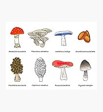 Mushroom Mania Photographic Print