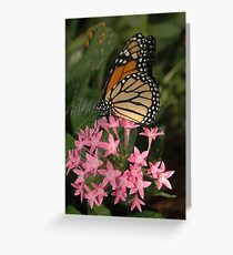 On  Pink Greeting Card